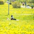 Pühapäev tõi selle aasta uue soojarekordi