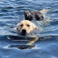 Собака спасла тонущего сурка