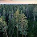 Levinuim puu riigimetsas on mänd, mis moodustab ligi 46% riigimetsa puidutagavarast. Järgnevad kuusk (27%) ja kask (19%).