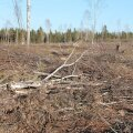 Raieõiguse lepingut tehes tasub kõik täpselt kokku leppida, et pärast ei seisaks metsaomanik silmitsi ootamatu vaatepildiga. Näiteks on raiutud oluliselt rohkem, kui omanik eeldas, lank näeb kole välja ja kõik on lõpuks veel juriidiliselt kombes ka.