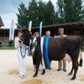 Tartu Agro lehm Killi juhib punaste lehmade eluajatoodangu edetabelit. 11aastane, üheksa korda poeginud Killi on andnud 134 489 kilo piima.