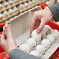 Kas ikka tead, mida ostad? Puust ette ja punaseks – just nii valid parima muna!