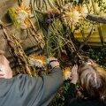 FOTOD: Õitsev öökuninganna meelitas rahva botaanikaaeda
