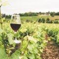 Veinitalud, mida sel suvel kindlasti külastada!