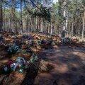 Riigiküla kalmistul on värskeid hauakääpaid nii kaugele, kui silm ulatub.