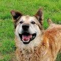Pontu oli üks koertest, kellele Varjupaikade MTÜ ja Delfi ühisprojekti Koduleidja kaudu kodu otsiti