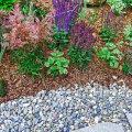 Multšimine aitab aias umbrohtu tõrjuda ja kahjuritega võidelda
