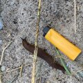 Hispaania teetigu (fotol) ei tohi segamini ajada seatigudega