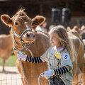 GALERII   Kauneimaks kohalikku tõugu lehmaks valiti Leedi