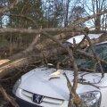 DELFI FOTOD: Paides lömastas tuule tõttu kukkunud puu sõiduauto