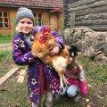 Tütar Suvi ja kukk Birk. Kuigi suurte ja nunnude koduloomade võtmine oli terve pere unistus, tundus kuke ja kanadega alustamine siiski pehmema maandumisena.