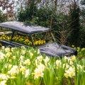 """Mullu kevadel oli lillefestivali teemaks """"Flower Power"""" – """"Lillede jõud"""". Nartsissid olid siis vallutanud mitu vana autovrakki."""