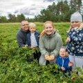 """""""Korjame ainult kollaseid marju, mis on vao vahele pudenenud, rohelised viljad on veel toored,"""" selgitavad Tanis ja Triin Kulp oma füüsalipõllul. Pildil koos lastega – Joonatani, Taneli ja Johannaga."""