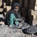 Каждый десятый ребенок в мире вынужден работать