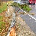 Murdunud puu maanteel