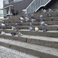 Lugeja fotod: puhvis tuvid hõivasid terve Tartu südalinna trepi