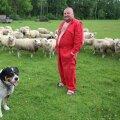 Õuemaa talu peremees Illar Bergmann koer Aaduga texeli tõugu lammaste keskel. Kokku on lambaid karjas 70.