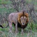 Safari ralli 2020
