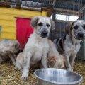 Valga koerte Varjupaigas
