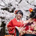 Jaapani kirsipuude õitsemise tipphetk oli tänavu varaseim pärast 812. aastat