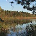 Lohja järve reostus osutus vetikate vohamiseks
