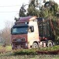 DELFI VIDEO ja FOTOD: Kuressaare sai jõulukuuse Saklast