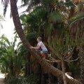 Teel palmi otsa, all motiveerivad kaktused (juuli 2016).