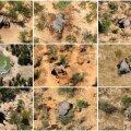 Dead elephants are seen in Okavango Delta