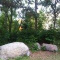 Metsatukk Arukülas, kus invaliid neli päeva lebas