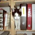 Jelli teab, millest üks kirjanik kirjutama peab – muidugi kassidest.