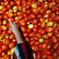 """""""Жесткий"""" Brexit обещает наводнить Эстонию дешевыми помидорами"""