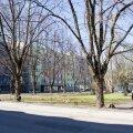 Võimaliku Bakuu pargi asukoht Kreutzwaldi ja Raua tänava nurgal.