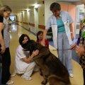 Teraapiakoerad külastasid lastehaigla neuroloogiaosakonda 12. detsembril.