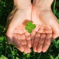 Täna on tuuleristipäev: rist on puhkemise, kasvamise ja kosumise märk