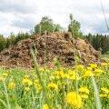 Kui põllumehel sõnnikuhunnikut lauda taga pole, on abiks biopreparaadid.