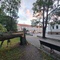 Tormis murdunud puu Toompeal