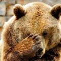 Loomakaitsjad: karu koht ei ole ööklubis