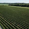 В Рийгикогу предложили продлить срок использования иностранной рабочей силы в аграрном секторе до конца года