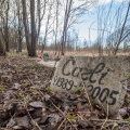 Lasnamäele Priisle tänava äärde aastate jooksul kujunenud mitteametlikul kalmistul on eriilmelisi haudu – mõne puhul on kasutatud ehtsaid graveeritud hauakive, teise juurde on löödud puidust rist.