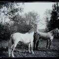 Ehmja mõis, kaks hobust karjamaal