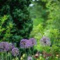 Kümme südasuvist aiatööd, mida ei tohi maha magada