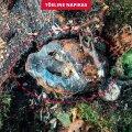 ФОТО | Счастливый случай: эстонский лесоруб был в миллиметре от смерти