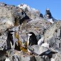 Antarktikas mõõdeti esimest korda üle 20 kraadi sooja