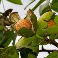 Valminud viljad ootavad korjamist.