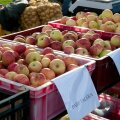 Maitseelamusi ja tarvilikke teadmisi otsiv õunafänn peab sammud seadma Türile