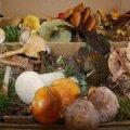 В Эстонии каждый год открывают все новые и новые виды грибов