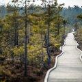 Самый лучший отдых в Эстонии: сотни вариантов досуга от RMK — бесплатно, увлекательно и очень интересно!