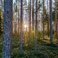 Roheline loodus Võrumaal
