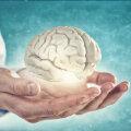 Inimese intelligentsuse võti võib peituda aju aeglases arengus