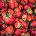 HINNAD TURGUDEL | Ilus ilm toob maasikahooajale kiire lõpu